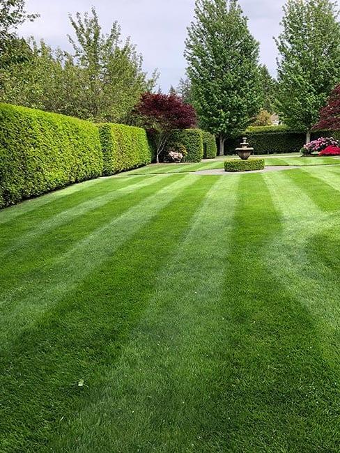 lawn-care-company-surrey