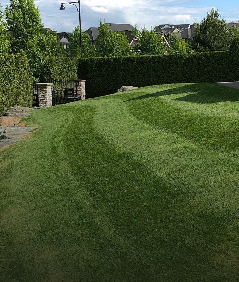 lawn-care-service-options