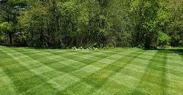 nat-bailey-lawn-cut