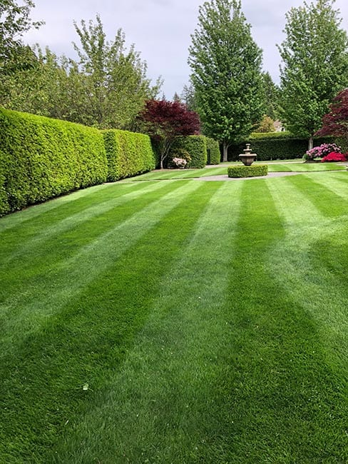 surrey-lawn-cutting-service-packages