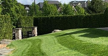the-natural-lawn-cut