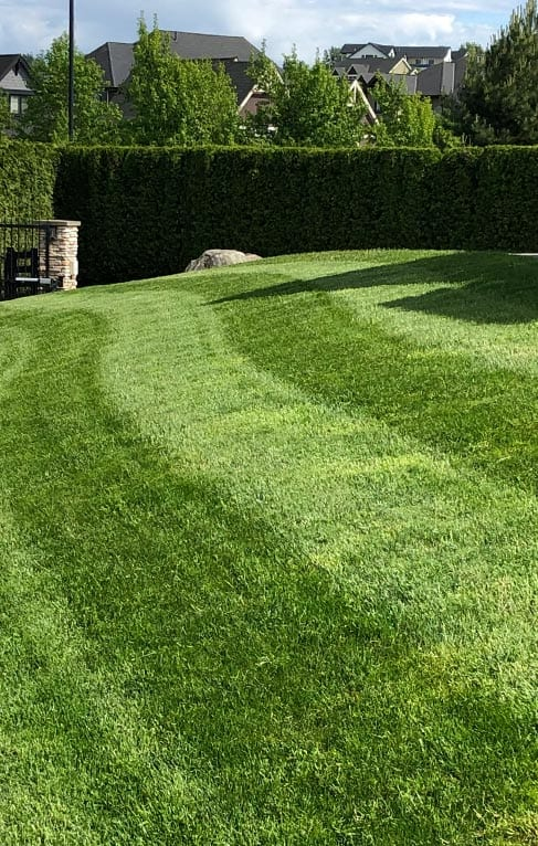 lawn-care-services-residential